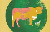 Illustration: a cow and a chicken inside a ball and chain