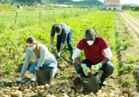 Connecting Health and Environment with an Agroecological Europe