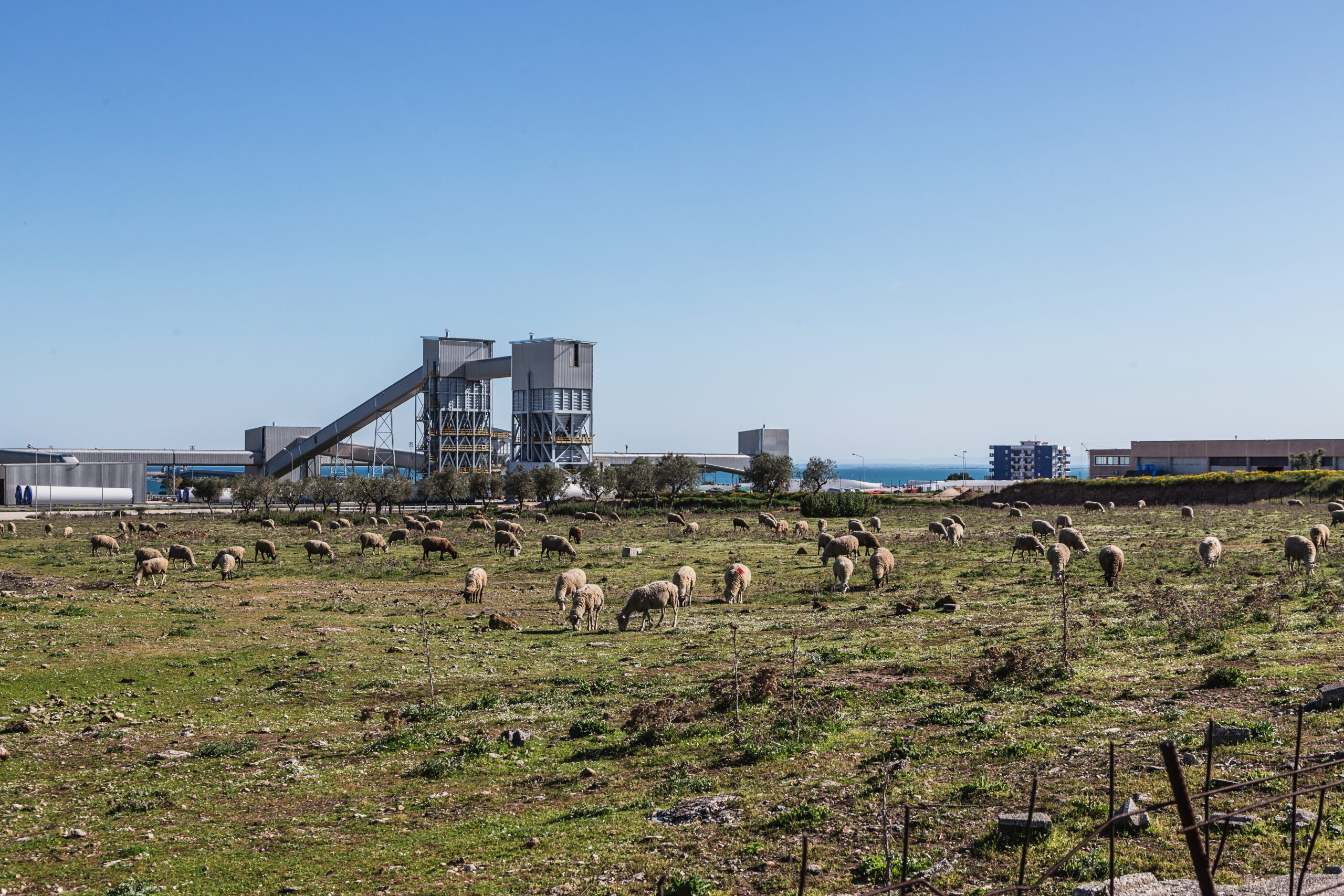 Contrada Pace - Sheep grazing next to the industrial area.