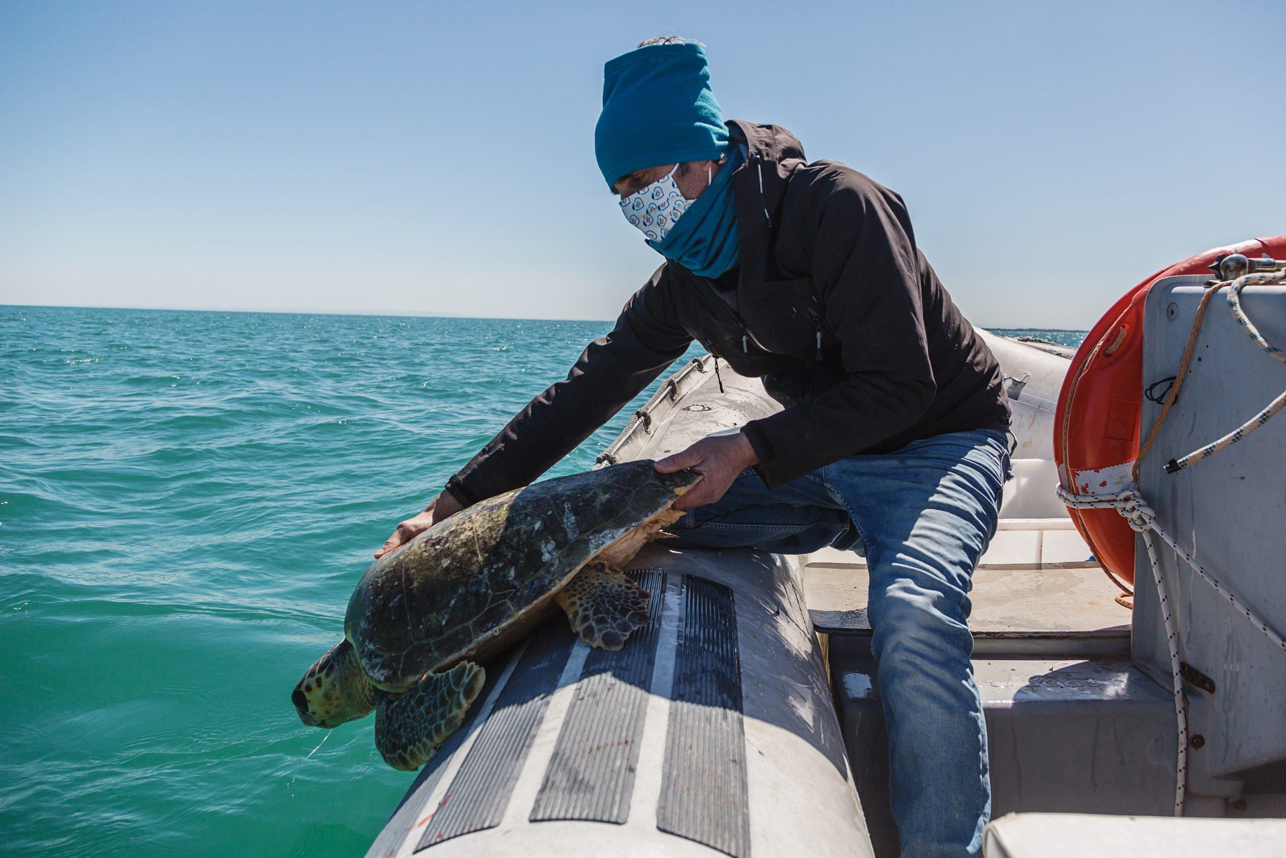 Manfredonia, Golfo - Giovanni Furii (Legambiente) libera in mare una tartaruga marina salvata da una cattura accidentale.